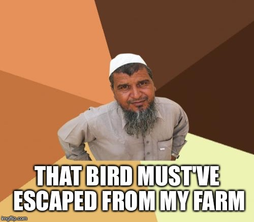 THAT BIRD MUST'VE ESCAPED FROM MY FARM | made w/ Imgflip meme maker