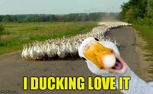 I DUCKING LOVE IT | made w/ Imgflip meme maker