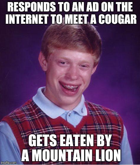 Meet a cougar