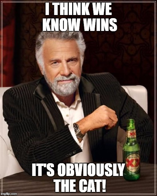 The Most Interesting Man In The World Meme | I THINK WE KNOW WINS IT'S OBVIOUSLY THE CAT! | image tagged in memes,the most interesting man in the world | made w/ Imgflip meme maker