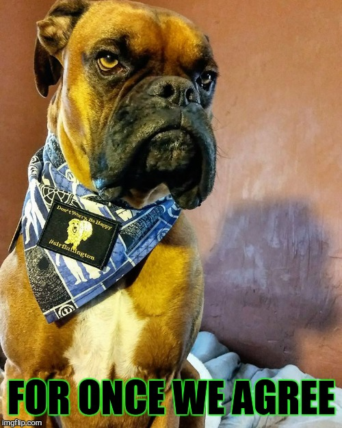 Grumpy Dog | FOR ONCE WE AGREE | image tagged in grumpy dog | made w/ Imgflip meme maker