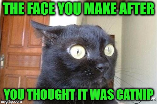 Cats | THE FACE YOU MAKE AFTER YOU THOUGHT IT WAS CATNIP | image tagged in cats | made w/ Imgflip meme maker