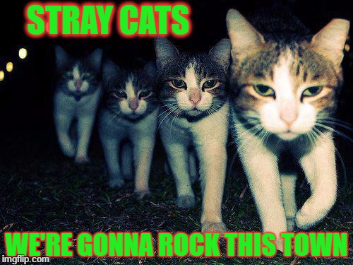 Wrong Neighboorhood Cats Meme | STRAY CATS WE'RE GONNA ROCK THIS TOWN | image tagged in memes,wrong neighboorhood cats | made w/ Imgflip meme maker