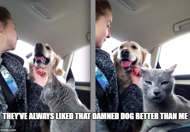 They've always liked the dog  | THEY'VE ALWAYS LIKED THAT DAMNED DOG BETTER THAN ME | image tagged in mad cat,dog vs cat | made w/ Imgflip meme maker