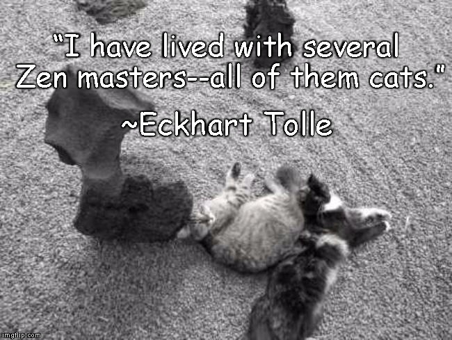 "Zen Cats | ""I have lived with several Zen masters--all of them cats."" ~Eckhart Tolle 