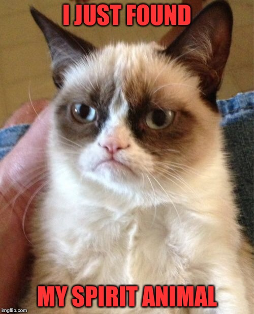 Grumpy Cat Meme | I JUST FOUND MY SPIRIT ANIMAL | image tagged in memes,grumpy cat | made w/ Imgflip meme maker