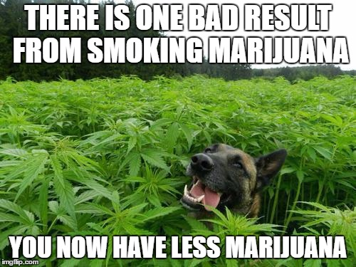 Oh, the disappointment | THERE IS ONE BAD RESULT FROM SMOKING MARIJUANA YOU NOW HAVE LESS MARIJUANA | image tagged in marijuanadog,memes,dank memes,skits bits and nits,marijuana,tragic memes | made w/ Imgflip meme maker