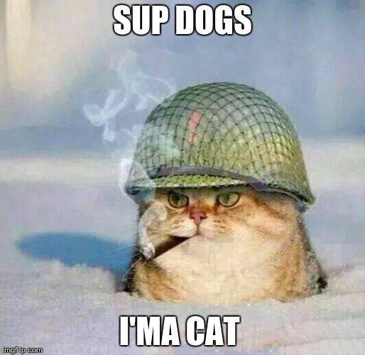 War Cat |  SUP DOGS; I'MA CAT | image tagged in war cat | made w/ Imgflip meme maker
