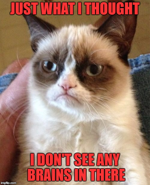Grumpy Cat Meme | JUST WHAT I THOUGHT I DON'T SEE ANY BRAINS IN THERE | image tagged in memes,grumpy cat | made w/ Imgflip meme maker