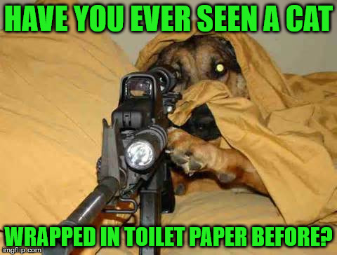 Sniper Dog | HAVE YOU EVER SEEN A CAT WRAPPED IN TOILET PAPER BEFORE? | image tagged in sniper dog | made w/ Imgflip meme maker