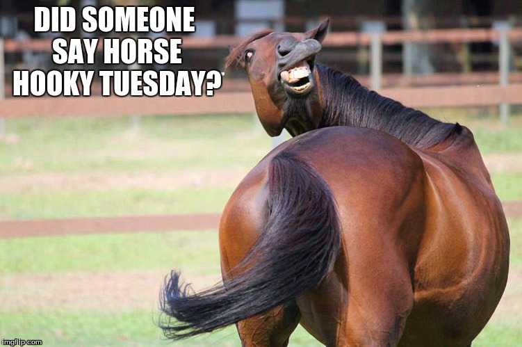 DID SOMEONE SAY HORSE HOOKY TUESDAY? | image tagged in horse face | made w/ Imgflip meme maker