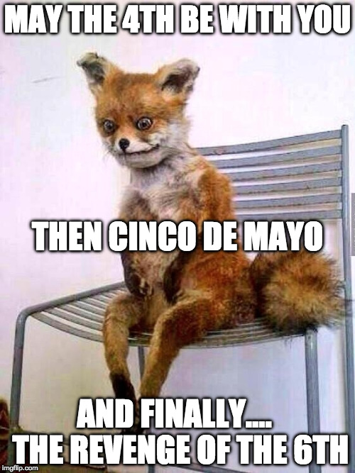 The hang over is strong in this one... |  MAY THE 4TH BE WITH YOU; THEN CINCO DE MAYO; AND FINALLY....  THE REVENGE OF THE 6TH | image tagged in drunken fox,may the 4th be with you,cinco de mayo,revenge of the sith,revenge of the 6th,bacon | made w/ Imgflip meme maker