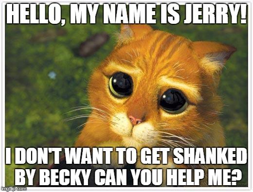 Shrek Cat Meme Imgflip