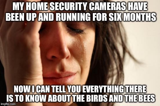 First World Problems Meme | MY HOME SECURITY CAMERAS HAVE BEEN UP AND RUNNING FOR SIX MONTHS NOW I CAN TELL YOU EVERYTHING THERE IS TO KNOW ABOUT THE BIRDS AND THE BEES | image tagged in memes,first world problems,funny,funny memes | made w/ Imgflip meme maker