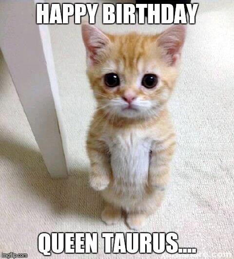 Birthday Cat Meme Generator: Cute Cat Meme