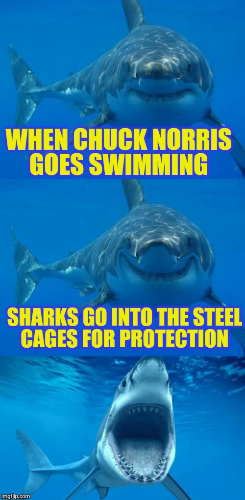 Bad Shark Pun  | WHEN CHUCK NORRIS GOES SWIMMING SHARKS GO INTO THE STEEL CAGES FOR PROTECTION | image tagged in bad shark pun | made w/ Imgflip meme maker