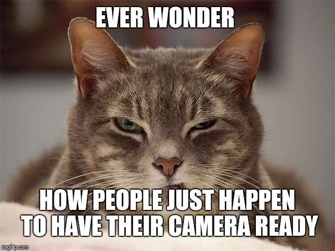 Sarcasm Cat | EVER WONDER HOW PEOPLE JUST HAPPEN TO HAVE THEIR CAMERA READY | image tagged in sarcasm cat | made w/ Imgflip meme maker