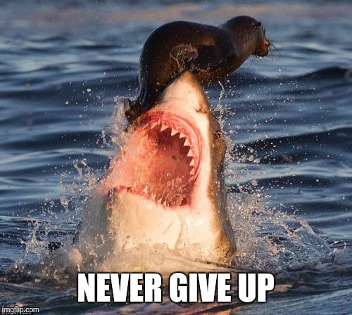 Travelonshark | NEVER GIVE UP | image tagged in memes,travelonshark | made w/ Imgflip meme maker