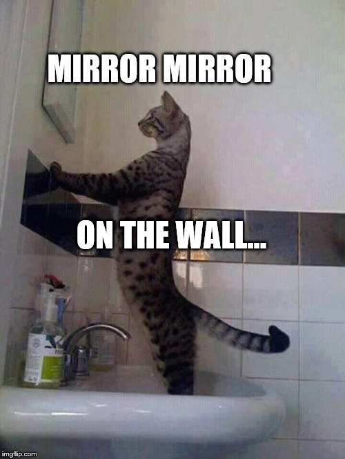 MIRROR MIRROR | MIRROR MIRROR ON THE WALL... | image tagged in mirror mirror | made w/ Imgflip meme maker