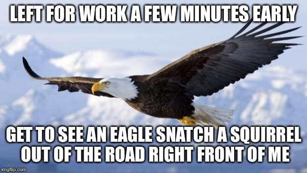 30 seconds later and I would have missed it | LEFT FOR WORK A FEW MINUTES EARLY GET TO SEE AN EAGLE SNATCH A SQUIRREL OUT OF THE ROAD RIGHT FRONT OF ME | image tagged in eagle | made w/ Imgflip meme maker