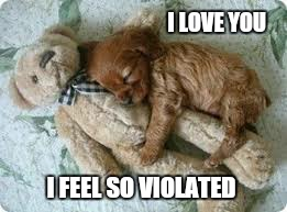 Now this is a sticky  situation  | I LOVE YOU I FEEL SO VIOLATED | image tagged in memes,cute,puppies and kittens,funny,teddy bears,relationship memes | made w/ Imgflip meme maker
