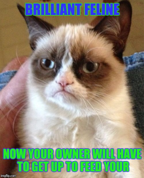Grumpy Cat Meme | BRILLIANT FELINE NOW YOUR OWNER WILL HAVE TO GET UP TO FEED YOUR | image tagged in memes,grumpy cat | made w/ Imgflip meme maker