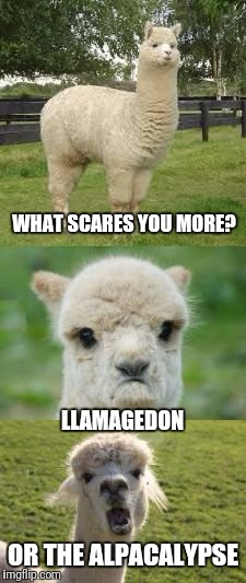 Alpaca Bad Pun | WHAT SCARES YOU MORE? OR THE ALPACALYPSE LLAMAGEDON | image tagged in alpaca bad pun | made w/ Imgflip meme maker