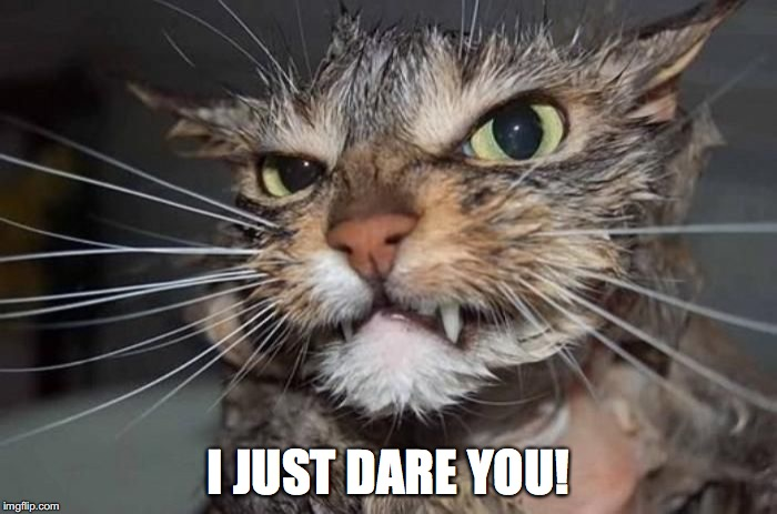 Cat Attacks Woman in Car