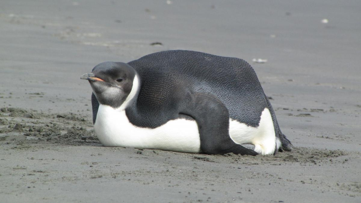 Penguin Meme Templates Imgflip