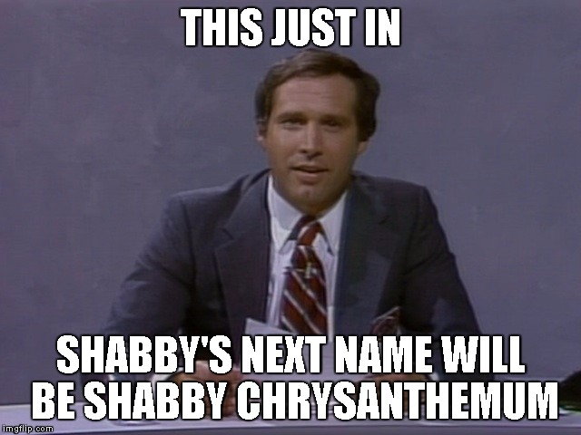 Chevy Chase | THIS JUST IN SHABBY'S NEXT NAME WILL BE SHABBY CHRYSANTHEMUM | image tagged in chevy chase | made w/ Imgflip meme maker