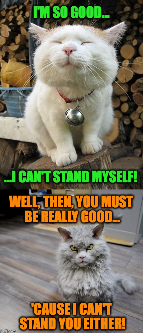 Pompous Albert Meets Smug Neighbour Kitty | I'M SO GOOD... 'CAUSE I CAN'T STAND YOU EITHER! ...I CAN'T STAND MYSELF! WELL, THEN, YOU MUST BE REALLY GOOD... | image tagged in can't stand him | made w/ Imgflip meme maker