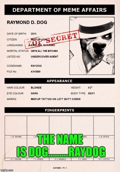 Don't make me come after you!!! | THE NAME IS DOG.........RAYDOG | image tagged in dept of meme affairs,memes,raydog,funny,secret agent dog,smooth criminal | made w/ Imgflip meme maker