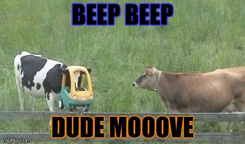 Stupid Cow | BEEP BEEP DUDE MOOOVE | image tagged in stupid cow | made w/ Imgflip meme maker