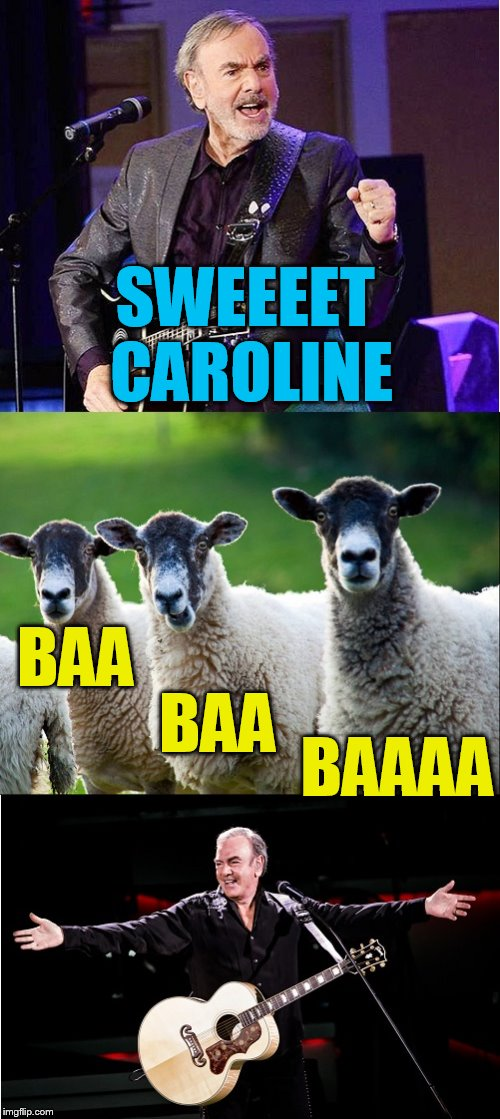 For my 400th submission, a Neil Diamond tribute! | SWEEEET CAROLINE BAA BAA BAAAA | image tagged in neil diamond,sheep,tammyfaye,400th submission | made w/ Imgflip meme maker