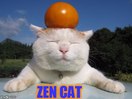MONDAY CHILL MEME WITH CAT | ZEN CAT | image tagged in meme,cat,funny,zen,happy monday | made w/ Imgflip meme maker