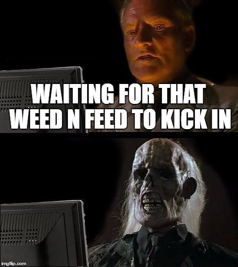 Ill Just Wait Here Meme | WAITING FOR THAT WEED N FEED TO KICK IN | image tagged in memes,ill just wait here | made w/ Imgflip meme maker