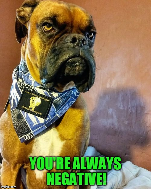 Grumpy Dog | YOU'RE ALWAYS NEGATIVE! | image tagged in grumpy dog | made w/ Imgflip meme maker