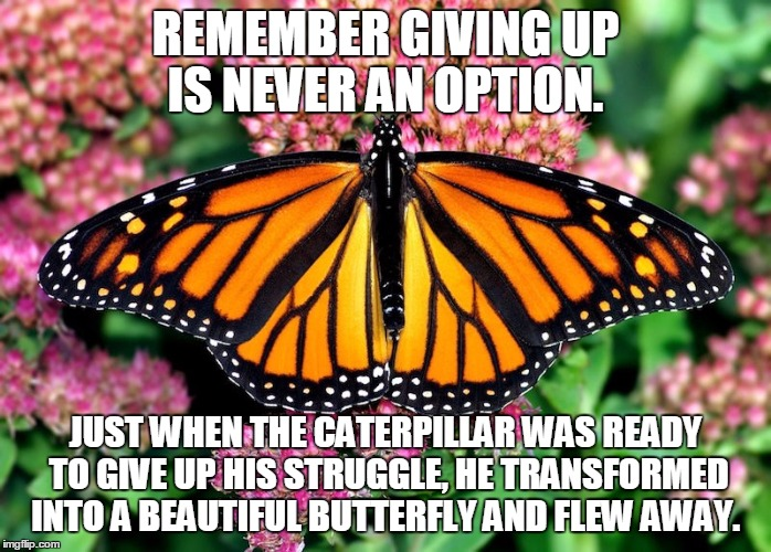 Image tagged in butterfly - Imgflip