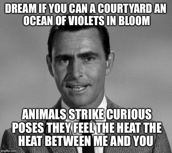 Rod Serling | DREAM IF YOU CAN A COURTYARD AN OCEAN OF VIOLETS IN BLOOM ANIMALS STRIKE CURIOUS POSES THEY FEEL THE HEAT THE HEAT BETWEEN ME AND YOU | image tagged in rod serling | made w/ Imgflip meme maker
