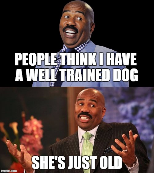 It's a secret though | PEOPLE THINK I HAVE A WELL TRAINED DOG SHE'S JUST OLD | image tagged in steve harvey,dogs | made w/ Imgflip meme maker