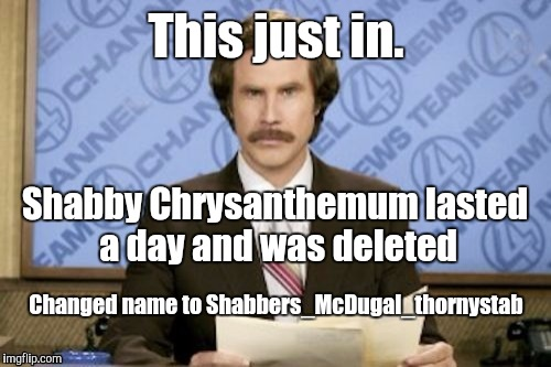 This just in. Changed name to Shabbers_McDugal_thornystab Shabby Chrysanthemum lasted a day and was deleted | made w/ Imgflip meme maker