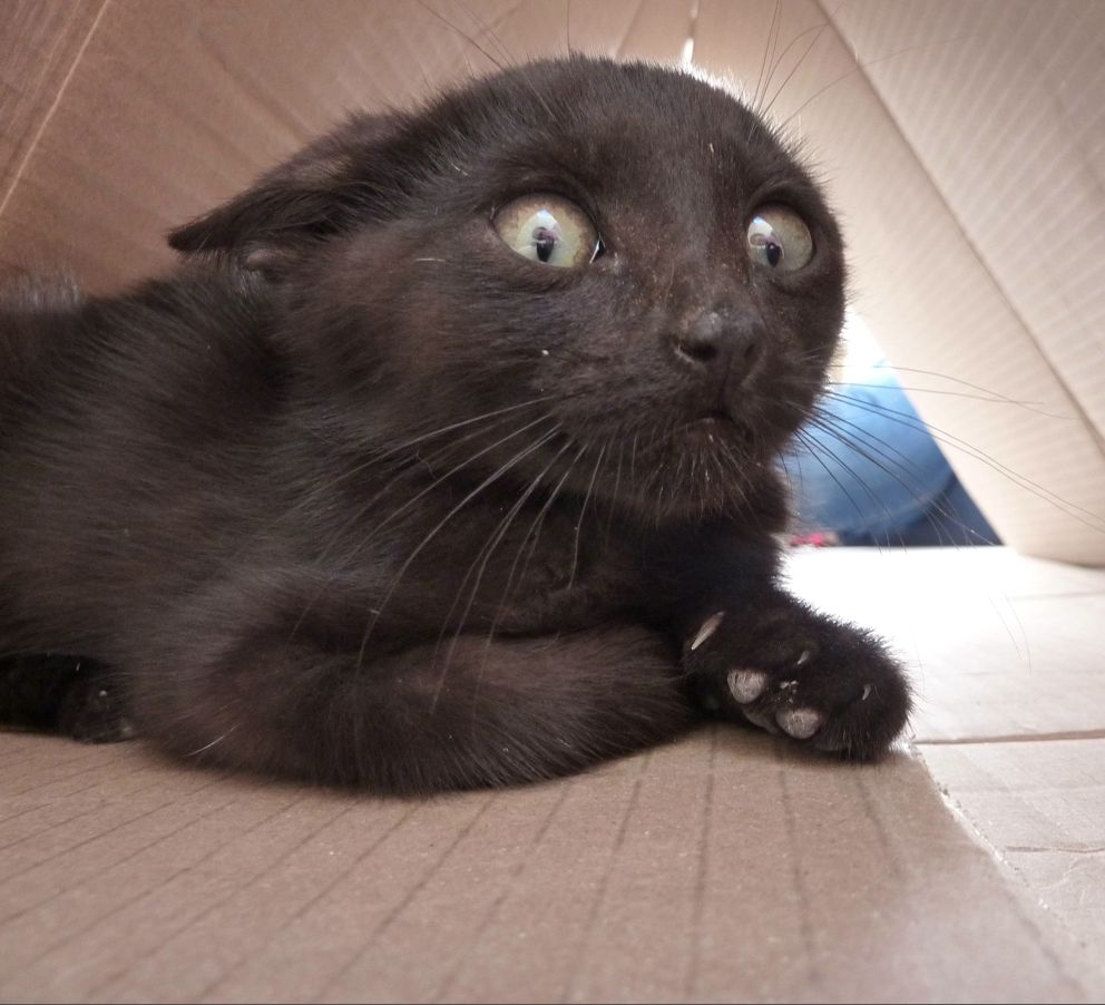 cat adoption milwaukee wi