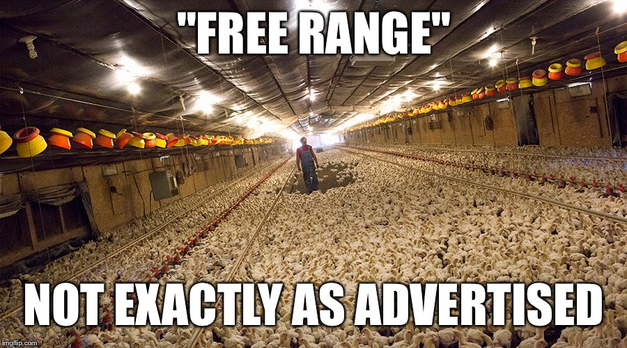 """FREE RANGE"" NOT EXACTLY AS ADVERTISED 