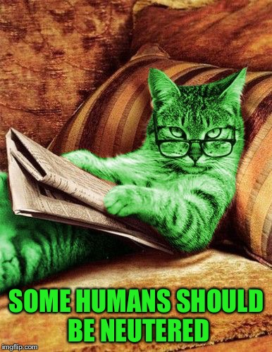 Factual RayCat | SOME HUMANS SHOULD BE NEUTERED | image tagged in factual raycat | made w/ Imgflip meme maker