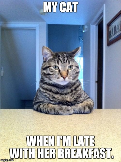 Take A Seat Cat Meme | MY CAT WHEN I'M LATE WITH HER BREAKFAST. | image tagged in memes,take a seat cat | made w/ Imgflip meme maker