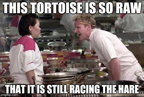 Angry Chef Gordon Ramsay Meme | THIS TORTOISE IS SO RAW THAT IT IS STILL RACING THE HARE | image tagged in memes,angry chef gordon ramsay | made w/ Imgflip meme maker