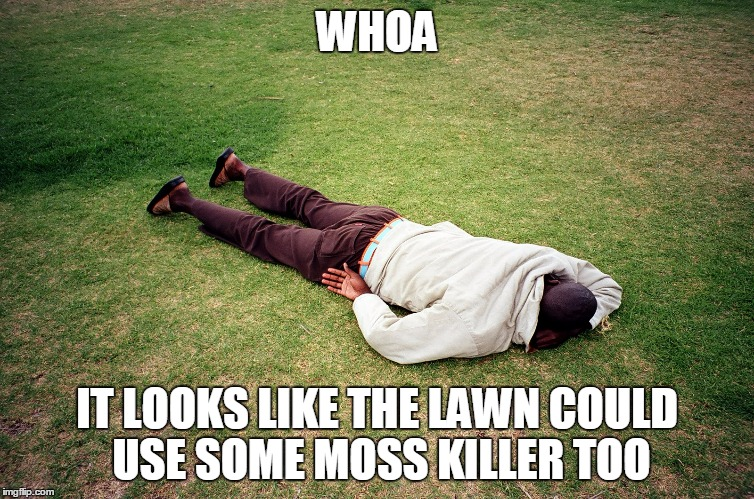 WHOA IT LOOKS LIKE THE LAWN COULD USE SOME MOSS KILLER TOO | made w/ Imgflip meme maker