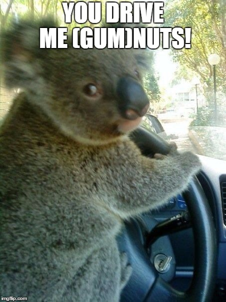Driving Koala | YOU DRIVE ME (GUM)NUTS! | image tagged in memes,koala,driving koala,gumnuts | made w/ Imgflip meme maker