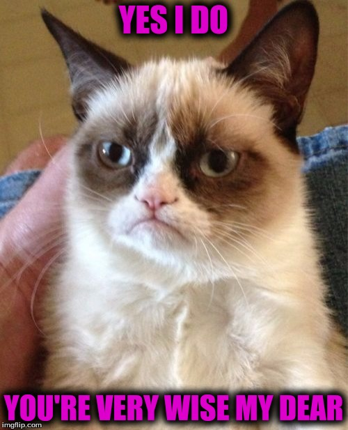 Grumpy Cat Meme | YES I DO YOU'RE VERY WISE MY DEAR | image tagged in memes,grumpy cat | made w/ Imgflip meme maker
