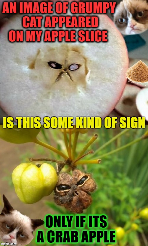 'Grumpy Cat' is the fruit cat messiah  | AN IMAGE OF GRUMPY CAT APPEARED ON MY APPLE SLICE ONLY IF ITS A CRAB APPLE IS THIS SOME KIND OF SIGN | image tagged in grumpy cat,fruit week,memes,funny,crabapples | made w/ Imgflip meme maker
